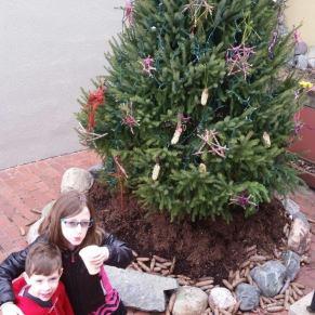 irv tree